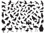 70 Bird Silhouette Vector Illustration - 213007744