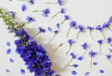 blue cornflowers and blue delphinium flowers in ornament against white background, top view