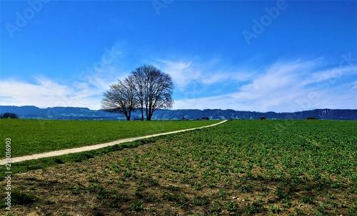 Łąka na wzgórzu w Zollikon w kantonie Zurych w Szwajcarii na wiosnę