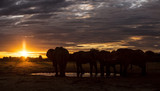 Elephant sundowner