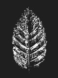 White Stamp of Leaf