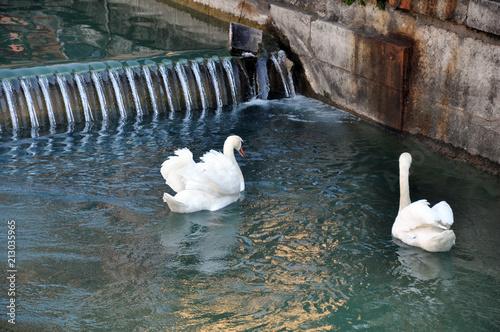 Fotobehang Zwaan Cygnes dans les canaux d'Annecy