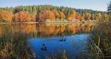 Idyllische Herbstlandschaft Deininger Weiher mit Enten, bei Dämmerung - 213040767