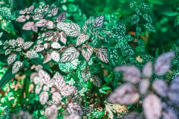 Original colorful wallpaper with leaves © Jairson