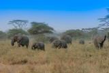 Elephants in Tanzania Herd