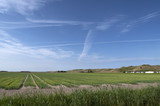 Agriculture, fields behind the dunes of Julianadorp. Coast of the Netherlands