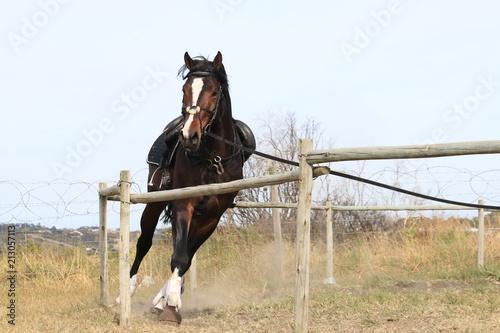Fotobehang Paarden On the Lunge Rein