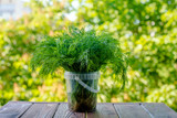 dill stands on a green natural background  - 213061397