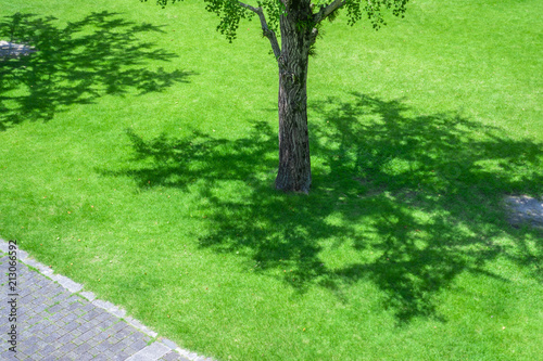 Fotobehang Lime groen tree and lawn
