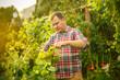 Leinwanddruck Bild - Mant prune grape brunch, work on a family farm