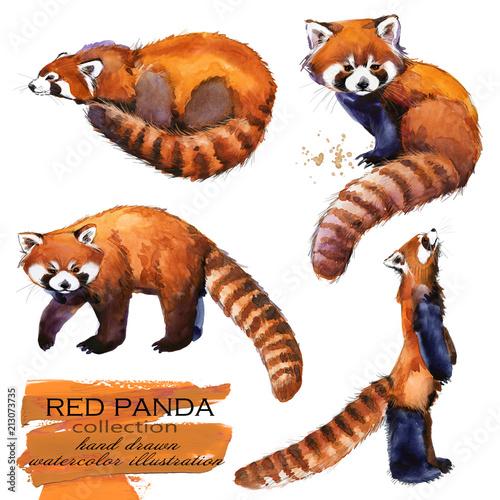 Red Panda hand drawn watercolor illustration set