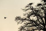Ritorno al nido