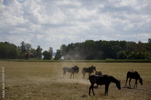 Fotobehang Paarden Horse in a field at Ekerö, stockholm