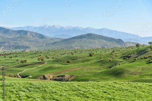 Aluminium Pistache Nature landscape in Lorestan Province. Iran
