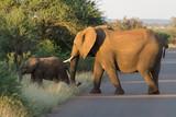 Elephants on Kruger NP,  South Africa