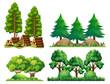 A Set of Forest Landscape - 213086926