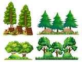 A Set of Forest Landscape - 213086926