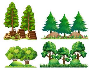 A Set of Forest Landscape
