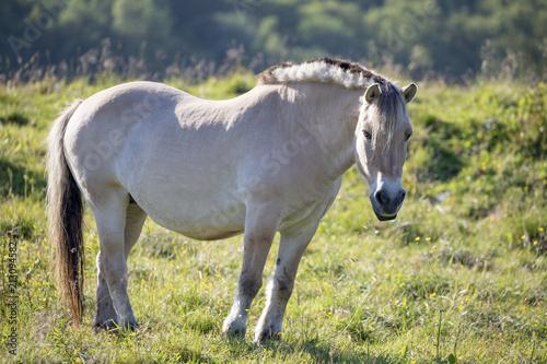 Fotobehang Paarden Horse on pasture