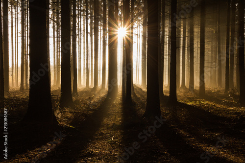 Morning in a forest. Sun peaking among trees. Beautiful rays of light. Mystical atmosphere.