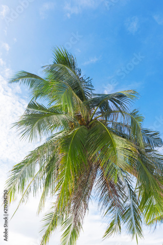 Palm leaves in front of blue sky