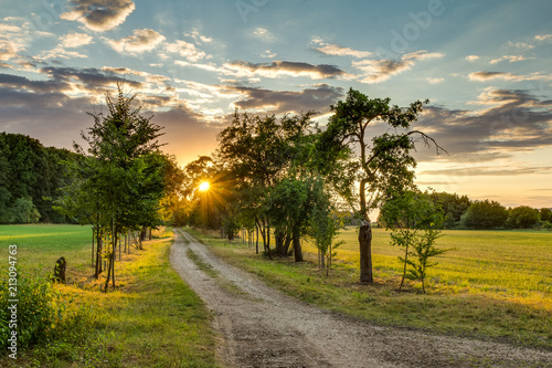 Fotobehang Honing Romantic sunset, sun peaking through the trees, shadows and light. Path leading to sun. Warm spring evening.