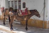 Donkey and mules providing transportation on Greek island - 213108939
