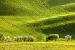 Spring fields. Fresh green color. Amazing landscape. Field waves create interesting shadows. Very popular location.