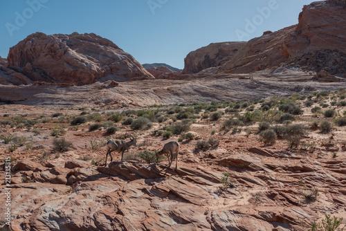 Aluminium Chocoladebruin desert view of mountains and goats in nevada