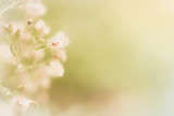 Flowers grass background. In soft style. - 213188143