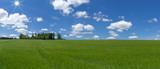Panorama - Großes Feld mit junger Gerste im Sonnenschein - 213192934