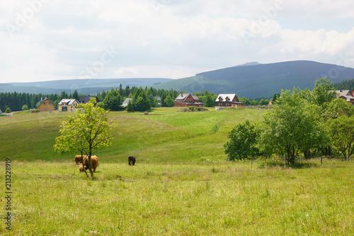 Aluminium Pistache Yaks in Giant Mountains in the Czech Republic