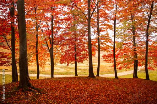 Autumn curtain