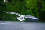 Gliding in - 213240107