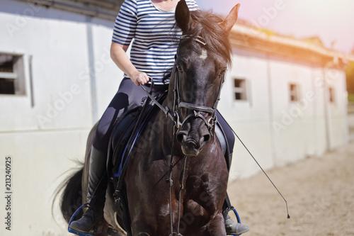 cheval noir croisement Alençon et pur sang arabe