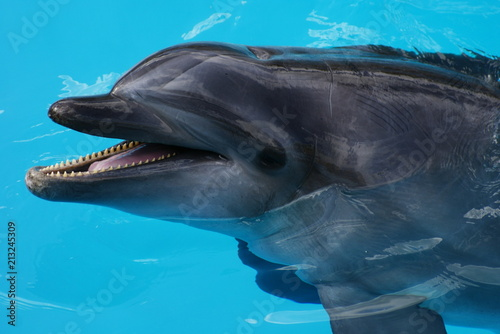 Foto Spatwand Dolfijn golfinho