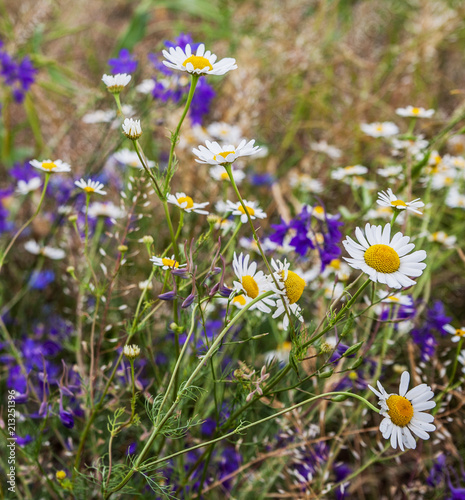 Wild flowers on the meadow.