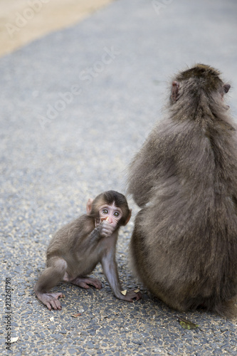 Fotobehang Aap Mother and baby Japanese monkeys