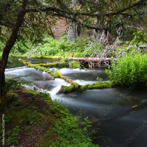 Fotobehang Zwart A small river running through lush green forests in Southern Oregon
