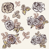 Collection of vector vintage had drawn roses - 213290166