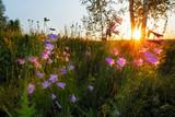 Sunrise field. Summertime - 213290914