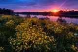 Summer sunset landscape with a river and yellow flowers - 213291714