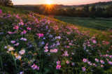summer rural landscape with pink flowers - 213291734