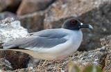 Galapagos Island Birds - 213298775