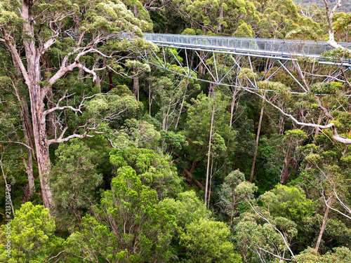 View of Tree Top Walk at Valley of the GIANTS at Walpole-Nornalup National Park, Western Australia.