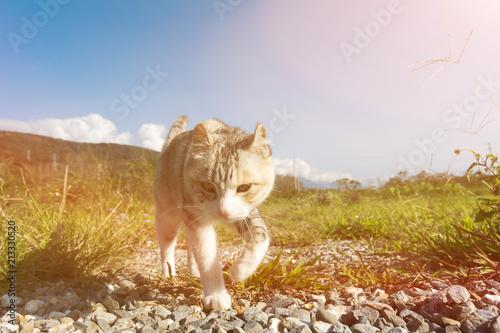 Fotobehang Kat domestic cat in outdoor