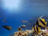 Underwater scene. Coral reef. Red Sea - 213331125
