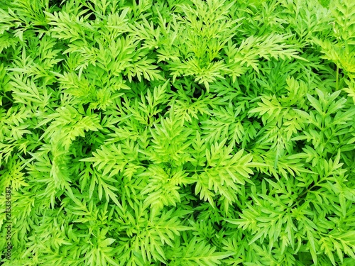 Green Leaves pattern texture background. - 213334383