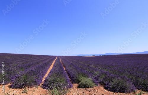 Canvas Lavendel Champ de lavandin à perte de vue sur le plateau du Lubéron