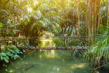 Small wooden bridge over small stream in rain forest with sunlight